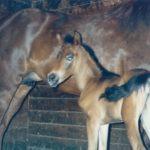 My Favorite Horse Photos