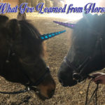 What I've Learned From Horses