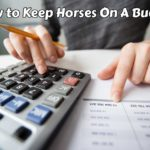 How to Keep Horses On a Budget