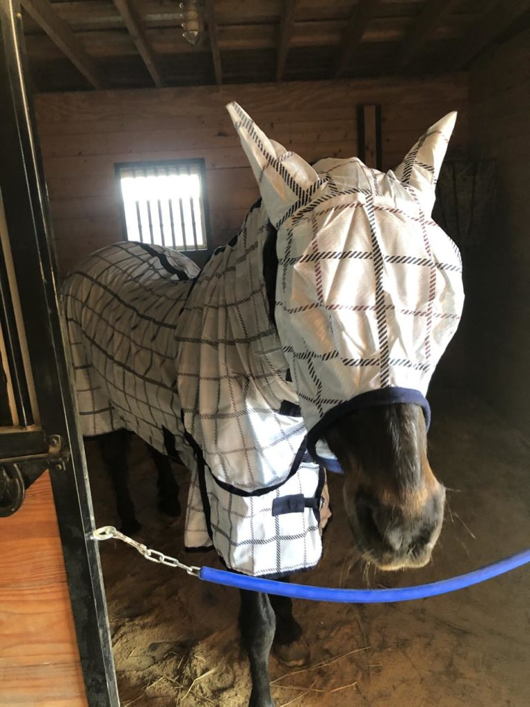 Horse wearing a matching light blue plaid fly mask and fly sheet