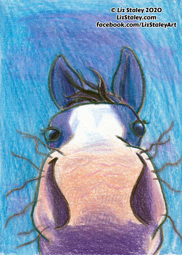 Drawing of a horse's nose, close-up, in shades of blue, purple, and peach.