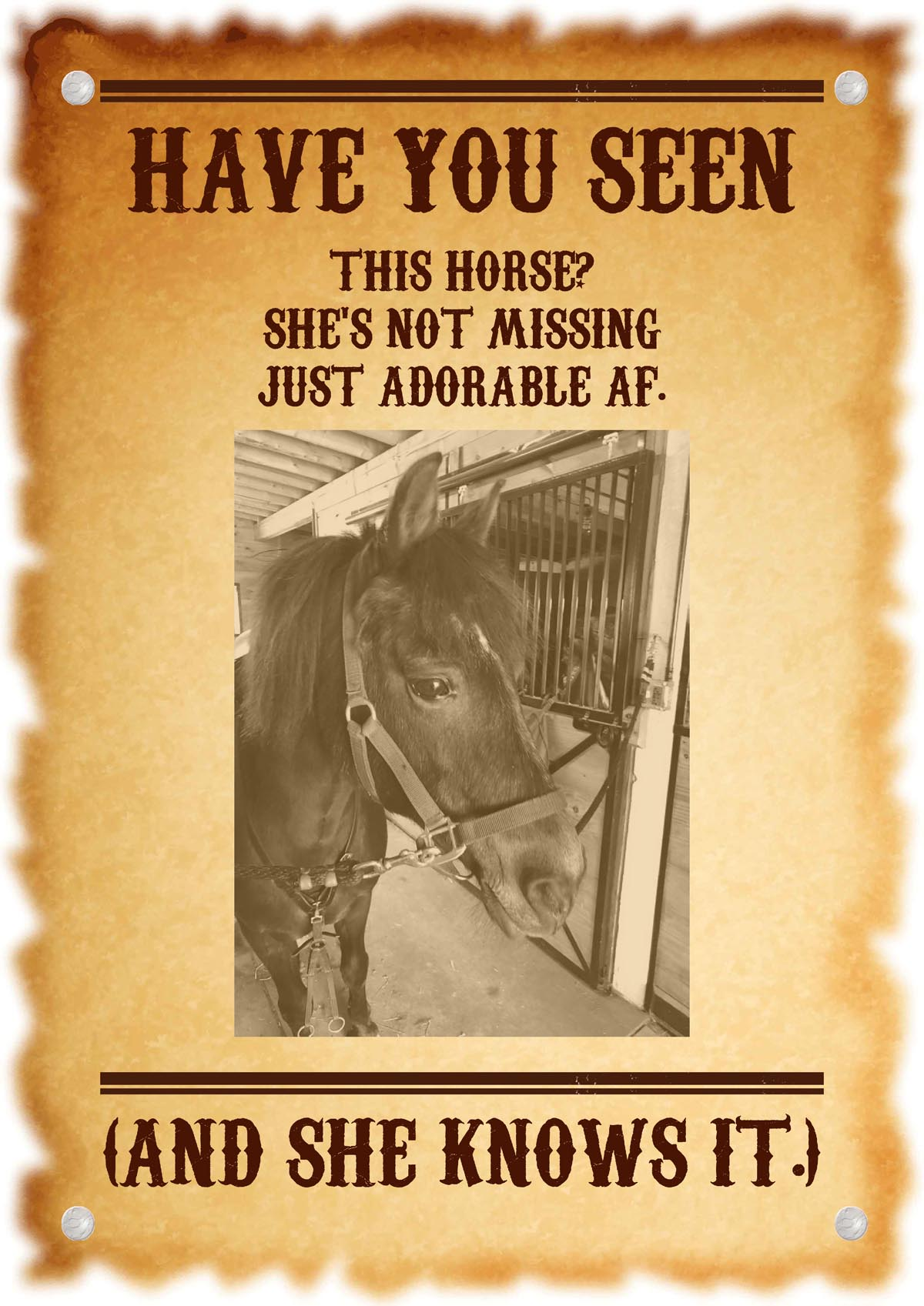 """""""Wanted"""" poster of a cute horse. The text reads """"Have you seen this horse? She's not missing, just cute af. And she knows it."""""""