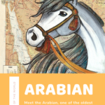 What is an Arabian Horse? Arabian Horse Facts and Origin