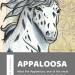The Famous Appaloosa Horse - A Treasure of the Nez Perce people