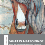Where are Paso Fino horses from? Meet the beautiful horse with a unique ambling gait!