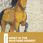 Can you buy a Mustang Horse? Facts and History of the Mustang Horse Breed!