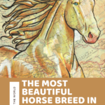 Is the Akhal-teke the Most Beautiful Horse Breed in the World?