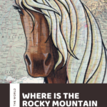 Where is the Rocky Mountain horse breed from? The answer may surprise you!