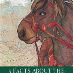 5 Facts about the Heihe Horse Breed
