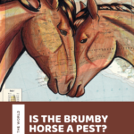 Is the Brumby horse a pest or part of Australia's heritage? Meet Australia's feral bands of Brumbies