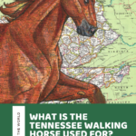 What is the Tennessee Walking Horse Used For? Facts and History of the breed!