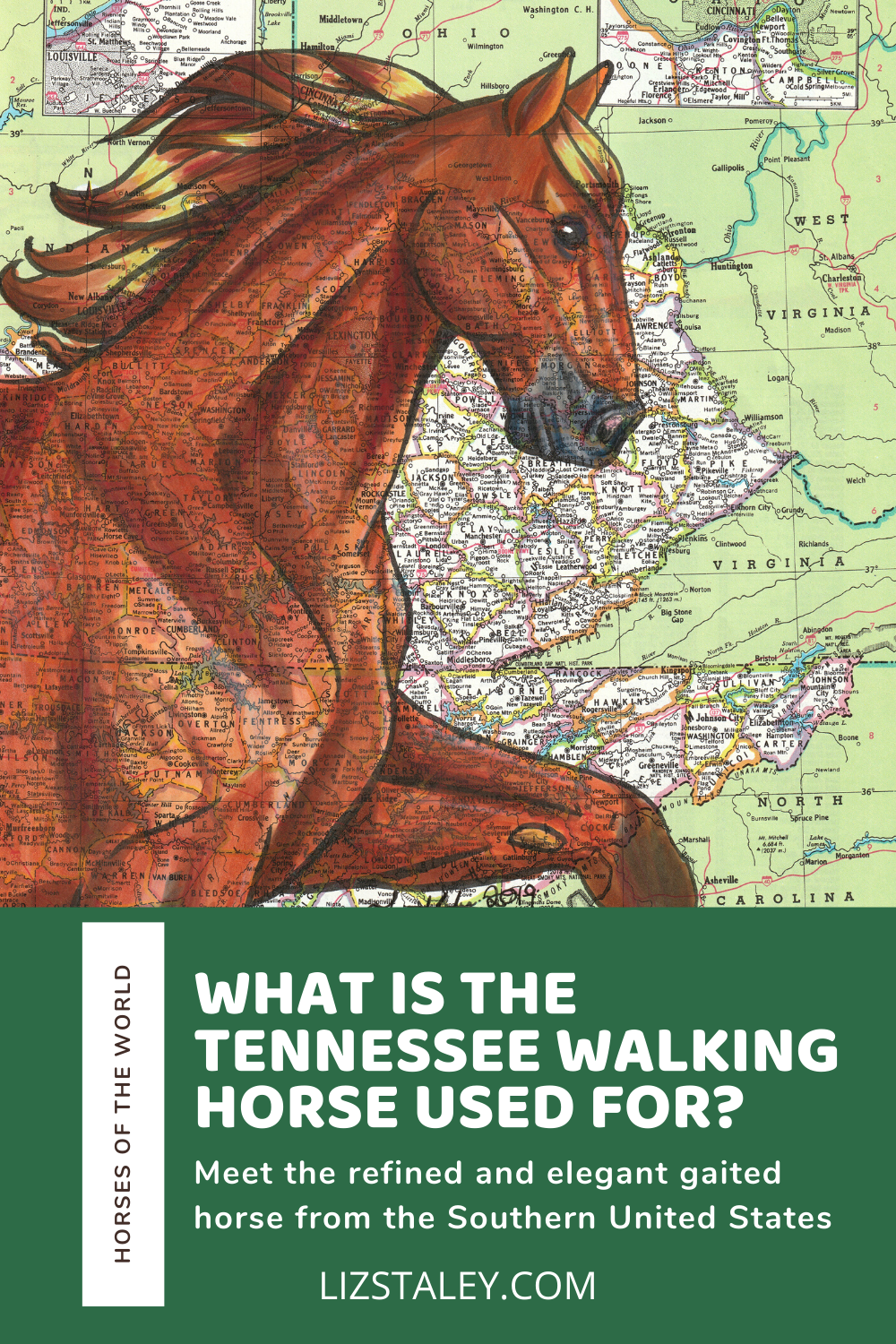 What Is The Tennessee Walking Horse Used For Facts And History Of The Breed Liz Staley Studios
