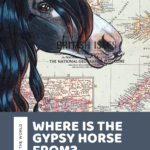 Where is the Gypsy Vanner horse from? History and Info about the Gypsy Vanner horse breed!