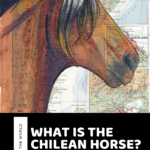What is the Chilean Horse? Facts and History of the Chilean Horse Breed!