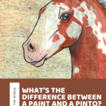 What's the Difference Between a Paint and a Pinto? Meet the American Paint Horse!